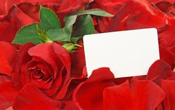 Cardboard and red rose in petals Stock Photography