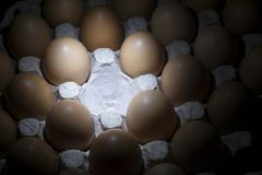 Cardboard tray with chicken brown eggs, with an empty cell in the middle. Close-up Royalty Free Stock Photos