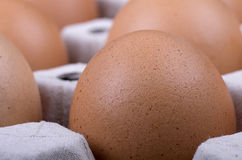Cardboard tray filled with brown eggs Royalty Free Stock Image