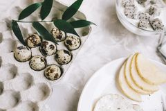 Cardboard tray with quail eggs with a green branch, next plate with breakfast on a gray concrete background. Horizontal Stock Image