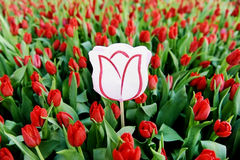 Cardboard tulip in a field of red tulips. A cardboard tulip symbolizing a message in a natural red tulip field Royalty Free Stock Images