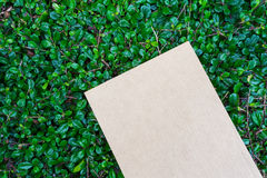 Cardbroad ha disposto sul modello verde della foglia Immagine Stock Libera da Diritti