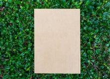 Cardbroad a placé sur le modèle vert de feuille image libre de droits
