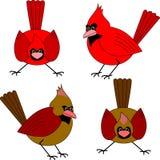 Cardenales ilustración del vector