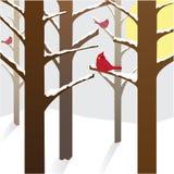 Cardenales en un día hivernal Foto de archivo libre de regalías