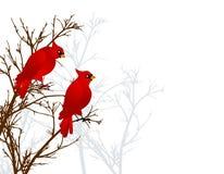 Cardenales rojos que se sientan en árbol ilustración del vector