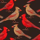 Cardenales septentrionales inconsútiles ilustración del vector
