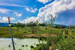 Cardi selvatici di fioritura porpora lungo un recinto Landscape Immagini Stock