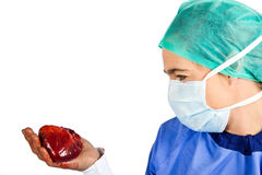 Cardiac surgeon looking at a heart Royalty Free Stock Photography