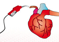 Cardiac system Stock Photo