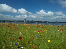 Cardiff Bay. Flowerbed in Cardiff Bay near the seashore stock photography