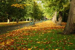 Cardiff park. Autumn cardiff park with bench, path, and leaves on the field stock photography