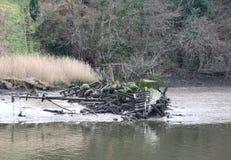 Cardigan de Teifi de rivière d'épave de bateau photo libre de droits