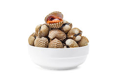 Cardiidae shellfish in white bowl isolated on white background Royalty Free Stock Images