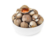 Cardiidae shellfish in white bowl isolated on white background. Cardiidae shellfish seafood in white bowl isolated on white background Royalty Free Stock Images