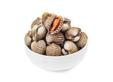 Cardiidae shellfish in white bowl isolated on white background. Cardiidae shellfish seafood in white bowl isolated on white background Royalty Free Stock Image