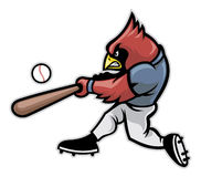 Cardinal baseball Royalty Free Stock Image