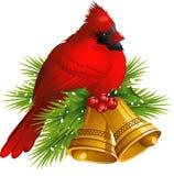 Cardinal Bird with Christmas bells Stock Images