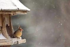 Cardinal at Bird Feeder Stock Photos