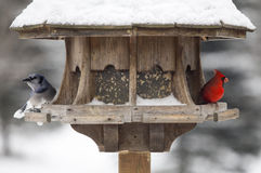 Cardinal at Bird Feeder. Snow Storm Canada Male Red royalty free stock photography