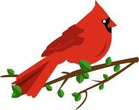 Cardinal Bird Stock Photos