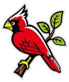 Cardinal bird on a tree branch Royalty Free Stock Photos