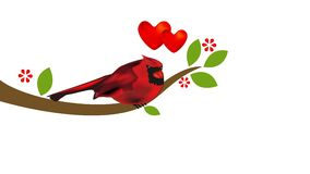 Cardinal on tree. Love heart valentines concept footage video clip. Cardinal bird on tree with flowers. Love heart valentines concept footage video clip stock video