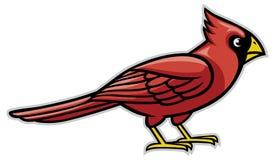 Cardinal bird Royalty Free Stock Photography