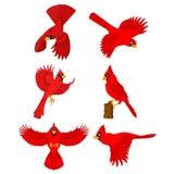Cardinal cartoon set Royalty Free Stock Photos