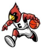 Cardinal comme mascotte de basket-ball Image libre de droits