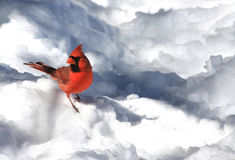 Cardinal dans la neige Photos stock