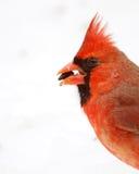 Cardinal dans la neige Image libre de droits