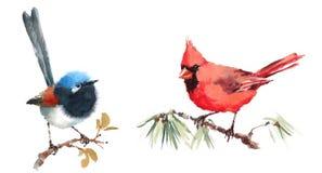 Cardinal du nord et fée Wren Birds Watercolor Illustration Set tiré par la main Images libres de droits