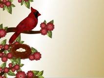 Cardinal et fond de nid Images stock