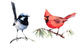 Cardinal and Fairy Wren Birds Watercolor Illustration Set Hand Drawn