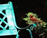 Cardinal-Have a seat Stock Photography