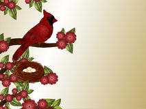 Cardinal and Nest Background Stock Images
