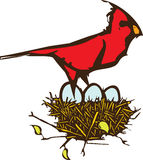 Cardinal Nest Royalty Free Stock Image