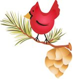 CARDINAL AND PINE CONE Stock Photography