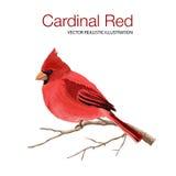 Cardinal Red Stock Photo