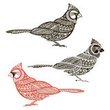 Cardinal. Set of  birds   on white background. Hand draw Royalty Free Stock Photo