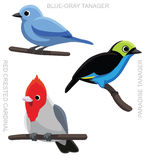 Cardinal Set de Tanager d'oiseau Images stock
