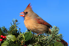 Cardinal In Snow Royalty Free Stock Images