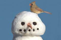 Cardinale sul pupazzo di neve Fotografia Stock Libera da Diritti