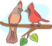 Cardinals couple Royalty Free Stock Photos