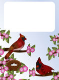Cardinals and Nest Royalty Free Stock Image