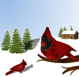 Cardinals and Snow Royalty Free Stock Photography