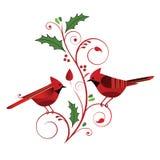 Cardinaux rouges et Flourish de Noël Images libres de droits