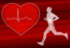 Cardio utbildning i hjärtsjukdomförhindrandebegrepp Royaltyfri Bild