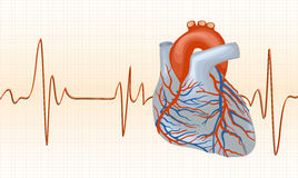 Cardiogram with heart Royalty Free Stock Image